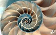 Spiral 6.5